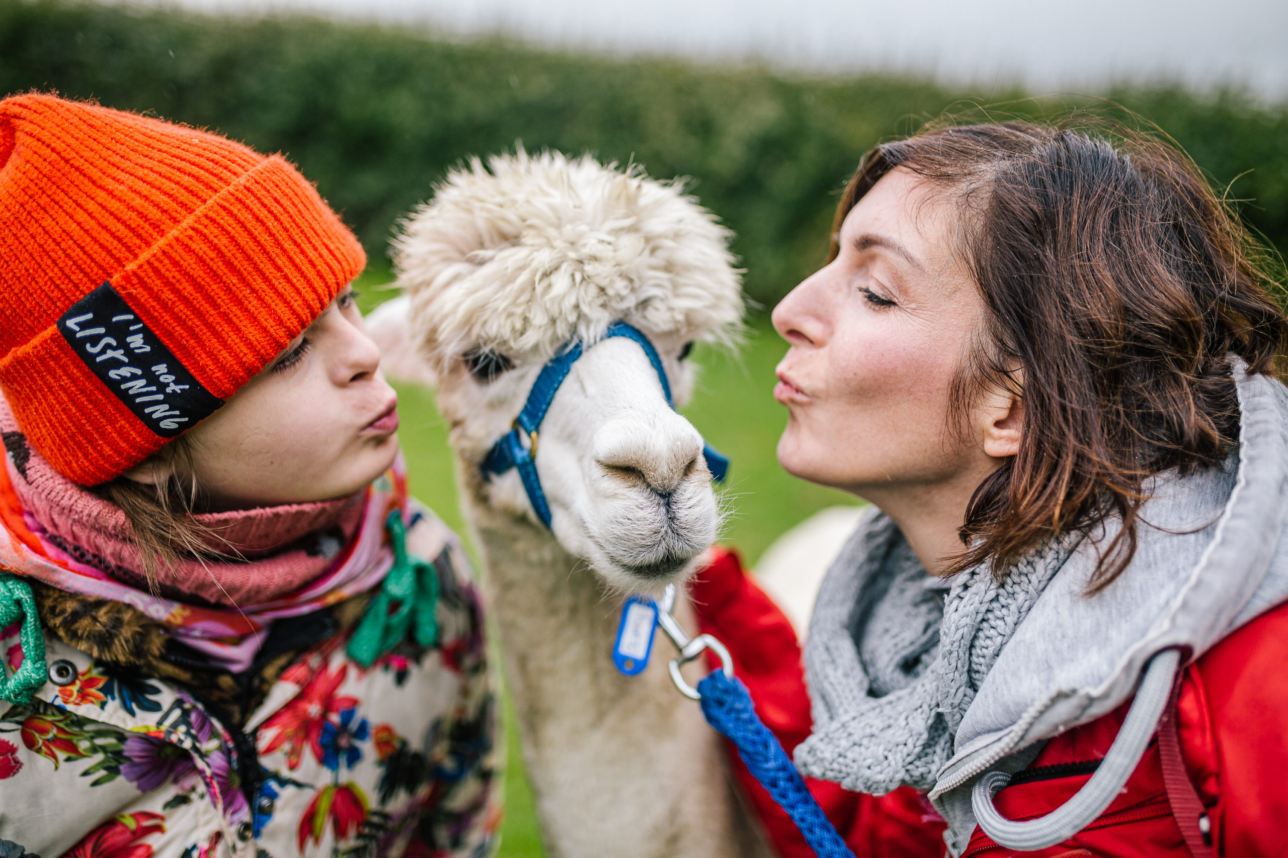 Alpaca & Falabella Ranch Rzadkiewa – Zeeland – Sonea Sonnenschein – Down-Syndrome